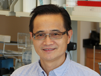Wenhong Cao, M.D. : <h4>Research Associate Professor, Nutrition</h4>