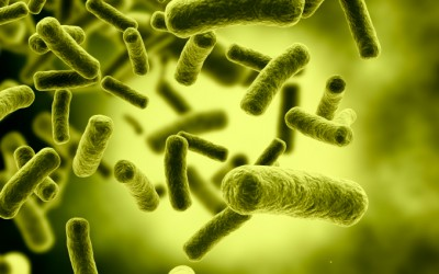 Gut Microbes: a Trillion Tiny Friends for Life