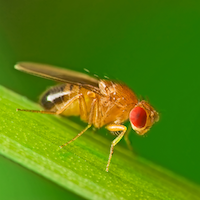 Why a Fly?